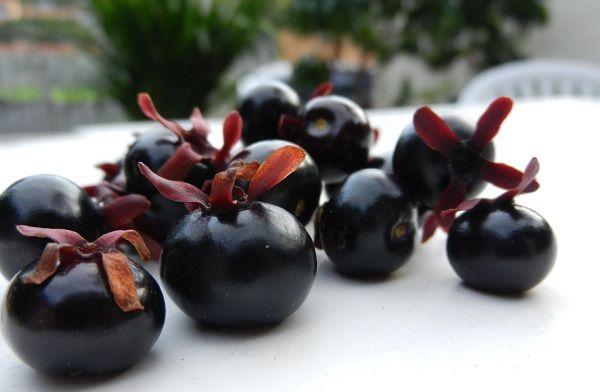 Grumixama - fruta brasileira