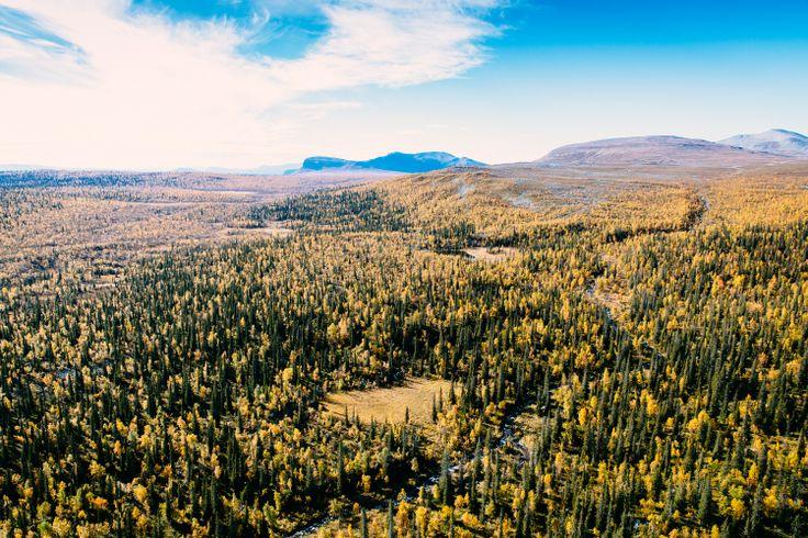 Tjaktja. Autumn offers high, crisp air and the mountain bursts into a magnificent color cavalcade. Photo: Carl-Johan Utsi