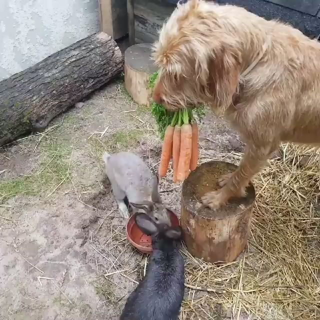 Some days you just need a video of a dog feeding carrots to his friends 凌路‍♂️凌