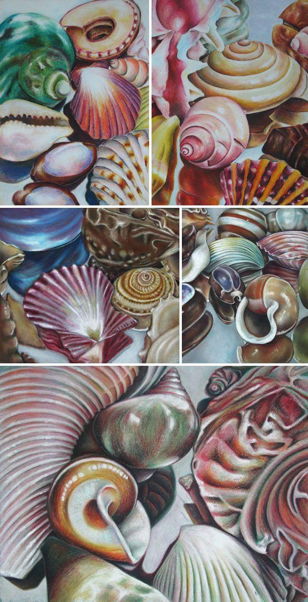 Drawing shells: art lesson