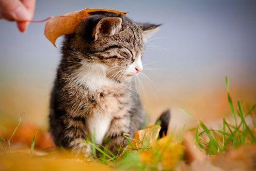 Jak rozwijają się kocięta?