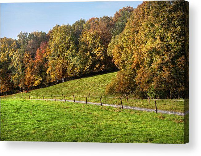 Acrylic Print of photograph Autumn Idyll by Jenny Rainbow.  Luminous green colors of the autumnal agriculture fields in sunny day with peacefully grazing cow. Photographed somewhere on the rural countryside of Germany.  To buy print please click on image. Order online, delivery, 30 days money back guaranty.