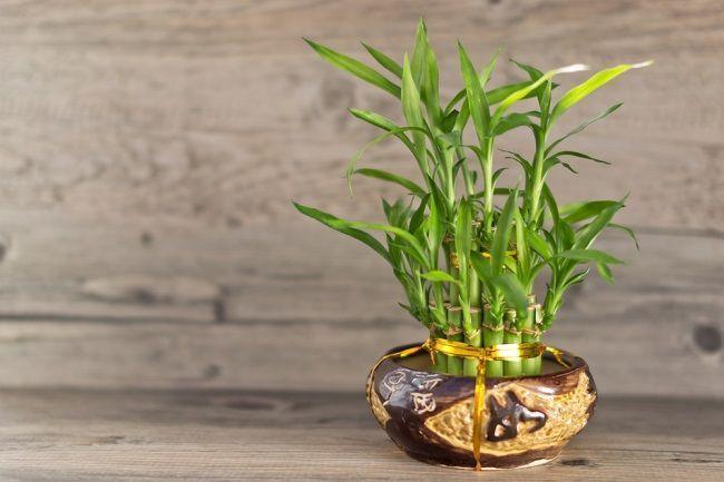 10 najlepších rastlín, ktoré priťahujú pozitívnu energiu
