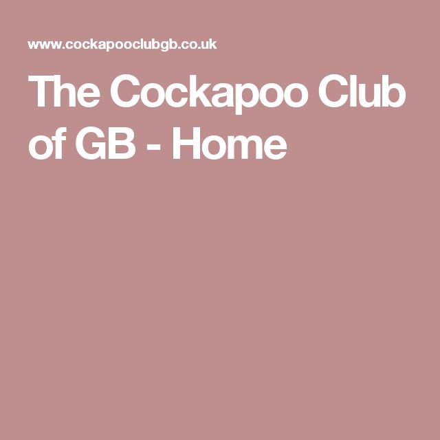 The Cockapoo Club of GB - Home