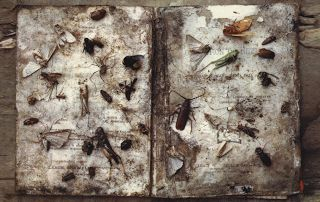 Mississippi Sisters: Emmet Gowin: Mariposas Nocturnas - Edith in Panama