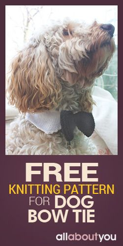 Free Knitting Pattern For Dog Bow Tie   for our fur babies ...