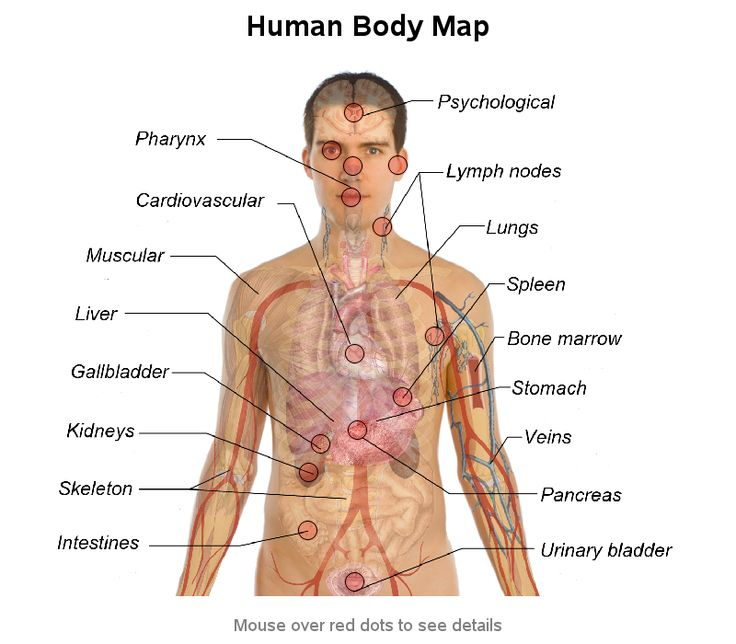 Anatomy female human body pictures