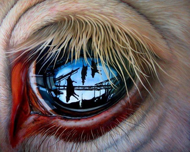 Look into my eyes...: Hyperrealist Paintings, Digital Art, Art Prints, Amazing Pics, Amazing Shots, Jackson Thilenius, Graphic Art, Eye Art, Animal
