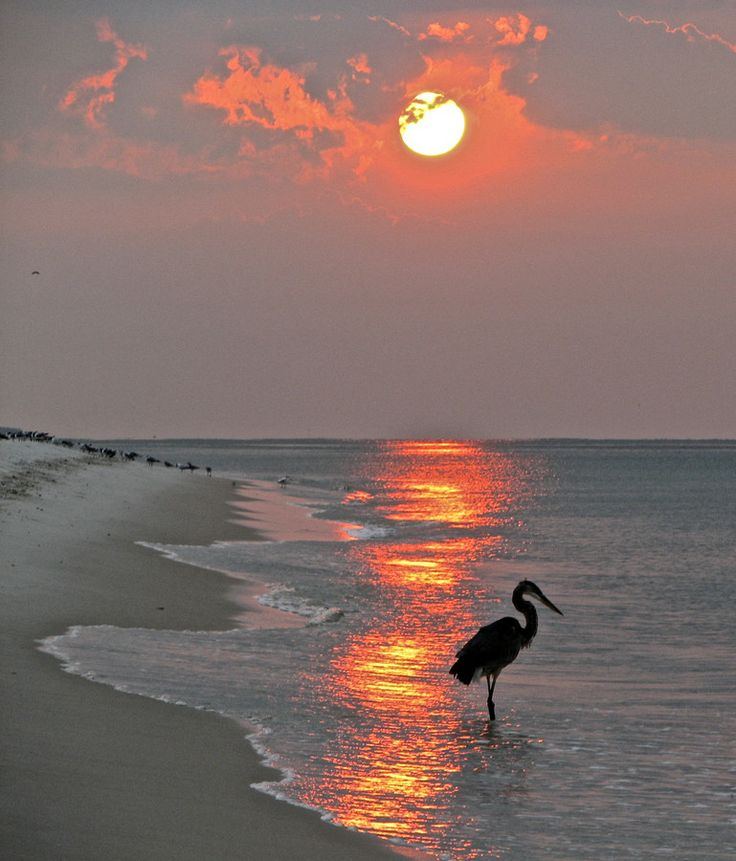 Crane looking for breakfast by John Greer on 500px