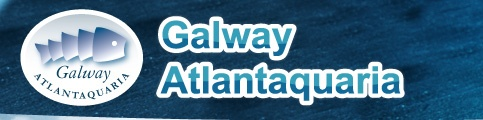 National Aquarium of Ireland - Family Activity in Galway, Irish Fish