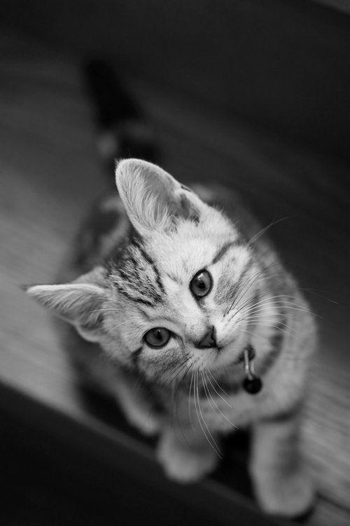 57 best Katzen schwarz weiss images on Pinterest Kitty cats - schwarz weiße küche