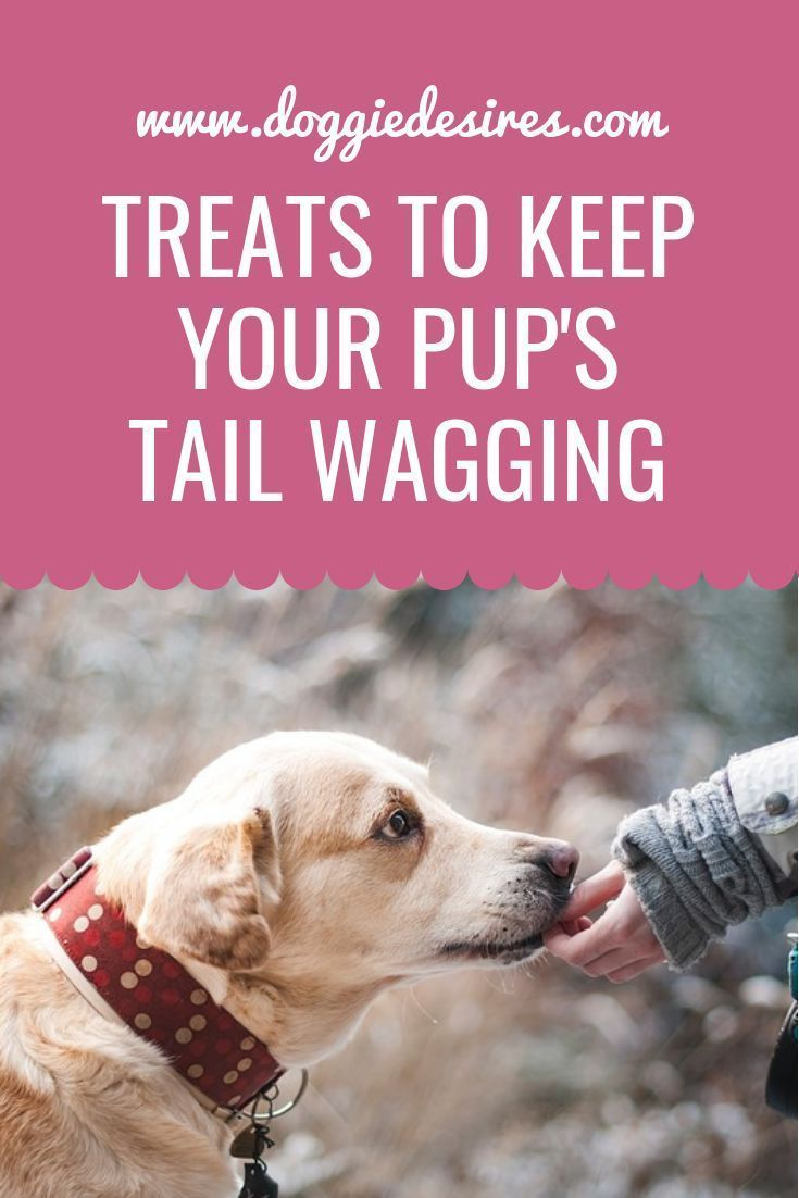 Treats To Keep Your Pup S Tail Wagging Dog Training Dog