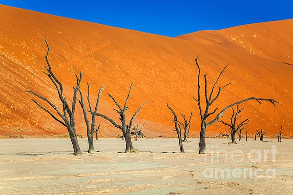Dead Vlei, Namibia, Africa ...a forest frozen in time....a graveyard of 900-year-old tree skeletons
