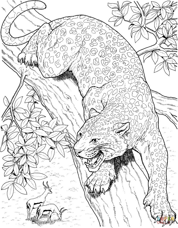 Printable Big Cat Jaguar Coloring Pages