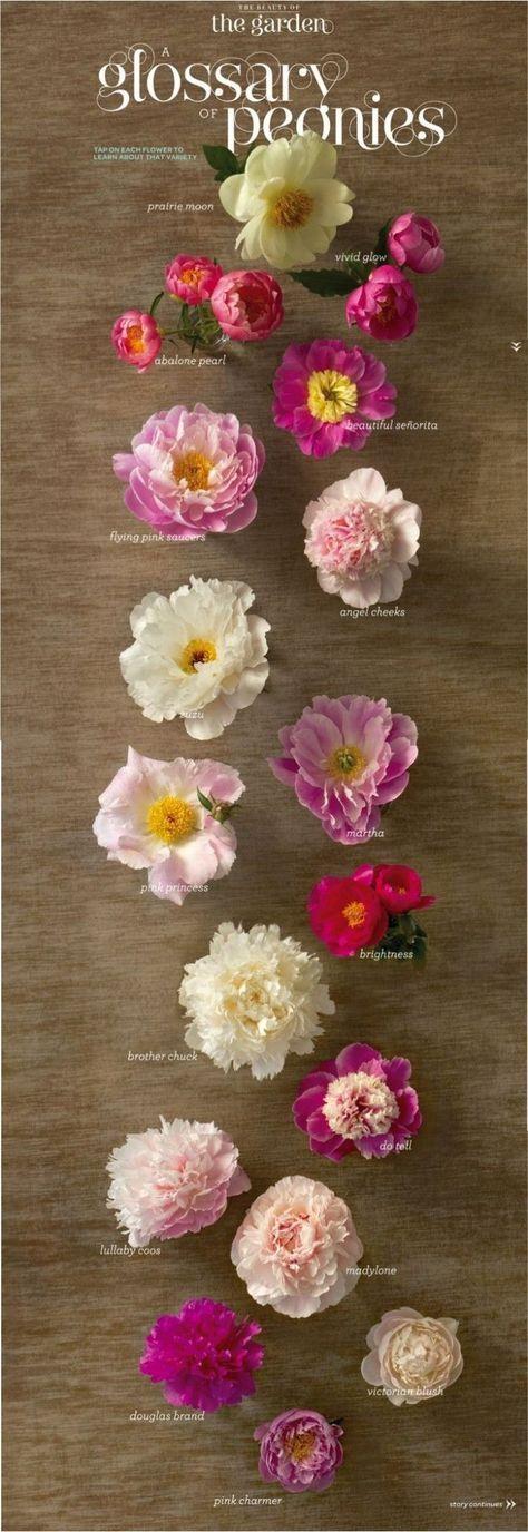 44 idées de dessin de fleurs griffonnages inspiration zou   – C