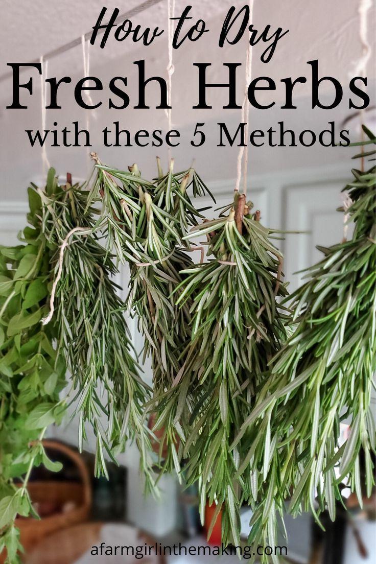 How To Dry Fresh Herbs Drying Fresh Herbs Backyard Herb Garden Herbs