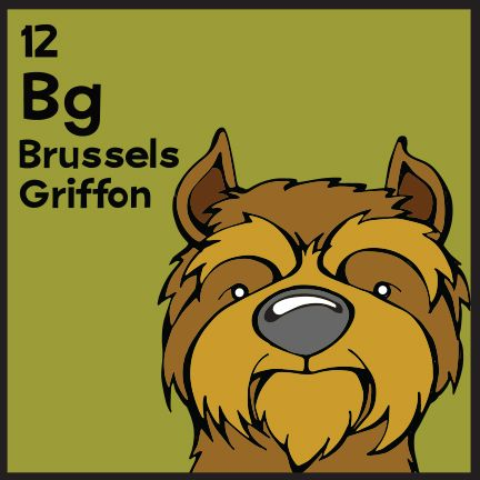 The 12th elemutt of The Dog Table is the Brussels Griffon. The Dog Table Poster features illustrations of 186 dog breeds. Dogs are organized in a similar layout and structure to the Periodic Table. #dogsoffacebook #BrusselsGriffon BUY THE DOG TABLE POSTER http://thedogtable.com