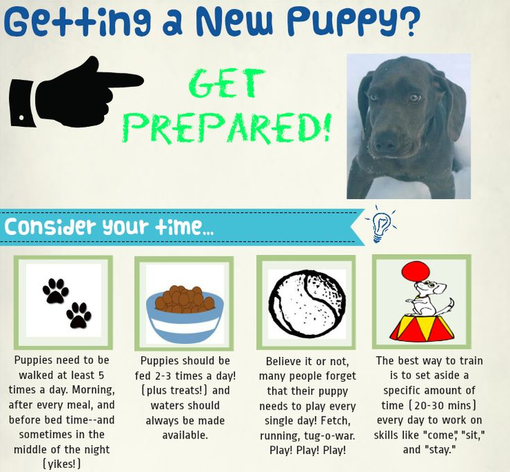 Visit my blog for puppy supply reviews and tips! #newpuppy #puppy #puppytips