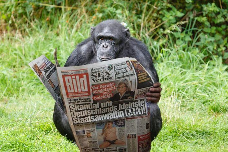 He is underwhelmed - Auch die Entwicklung der Bananenpreise kam für seinen Geschmack zu kurz: Coco (15) beim Studium des Wirtschaftsteils