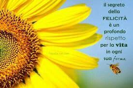 FRACES (Italiano)