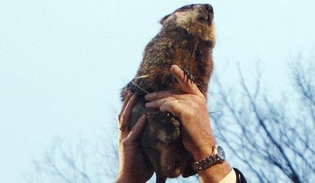 Americanos querem executar marmota Phil – R a g news noticias   R a g news noticias