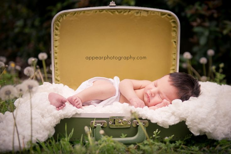 newborn boy outside in suitcase with dandelions ©Appear Photography www.appearphotography.com