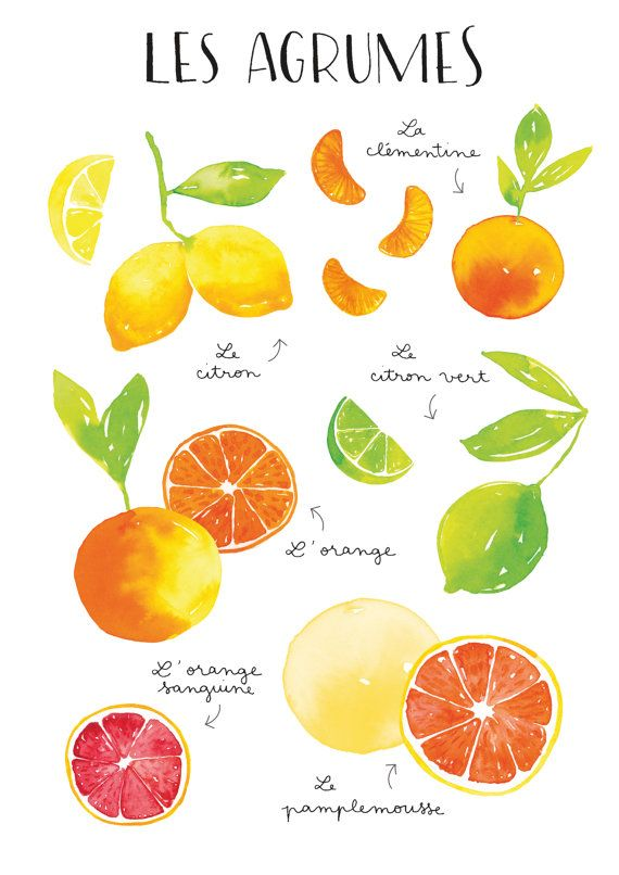 A4 Watercolor Citrus fruits Art Print by NathalieOuederni on Etsy