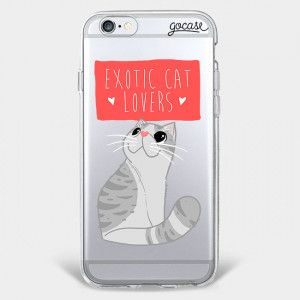 Exotic Cat