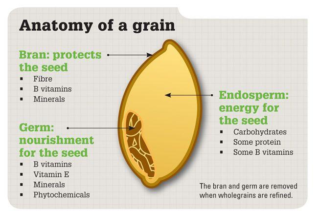 Anatomy of a Grain —Image by Earnest Holistic Health
