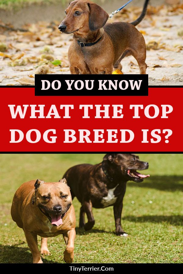 The Top 20 Most Popular Dog Breeds For 2019 Dogs Dog Breeds Top Dog Breeds Most Popular Dog Breeds