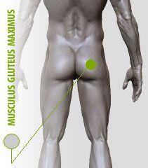 Fitness oefeningen bilspieren |