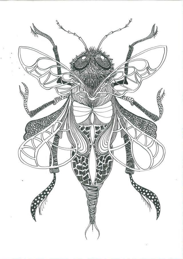 Insecten tekenen met oostindische inkt