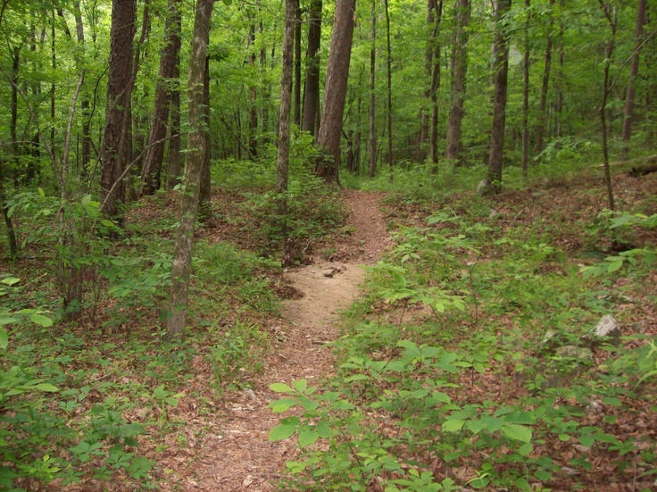 Hunt's Loop Trail, Ouachita National Forest (4.3 mile loop) is north of Hot Springs AR, near Jessieville - Along this trail, hikers enjoy panoramic views from Short Mountain Vista & interesting geologic features on the steep rocky slope above Iron Springs. It travels through open woods on the ridge top & is an ideal day hike. Also in the area is the Friendship Trail (0.7 mile) an interpreted nature trail that's fully accessible. #Arkansas #Hot_Springs #trail #hike #national_forest #Ouachita