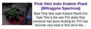 Pink Vein Indo Kratom Plant Kratom Mitragyna Speciosa Kratomplants Kratom Mitragyna Speciosa Kratomplants http://ctplr.tumblr.com/post/143607718798