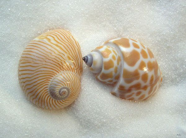 """Try this tongue twister """"She sell sea shell on the sea shore""""  (image source: www.ohdesignstudio.com )"""