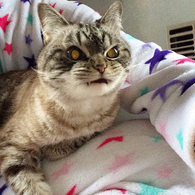Él es loki, el famoso gato con dientes de vampiro y la mirada diabólica | AldeaViral