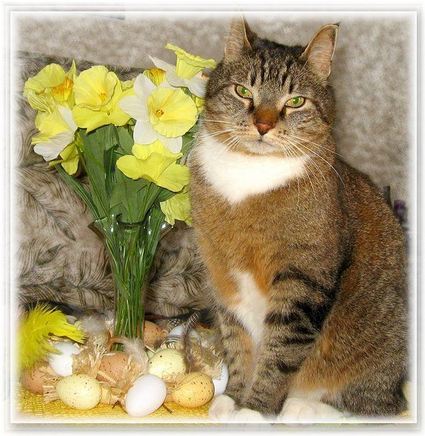 easter flowers and cats