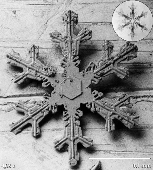 Agricultural Research Center di Beltsville (USA)  immagini di cristalli di fiocchi di neve al microscopio  temperatura di -170°C.