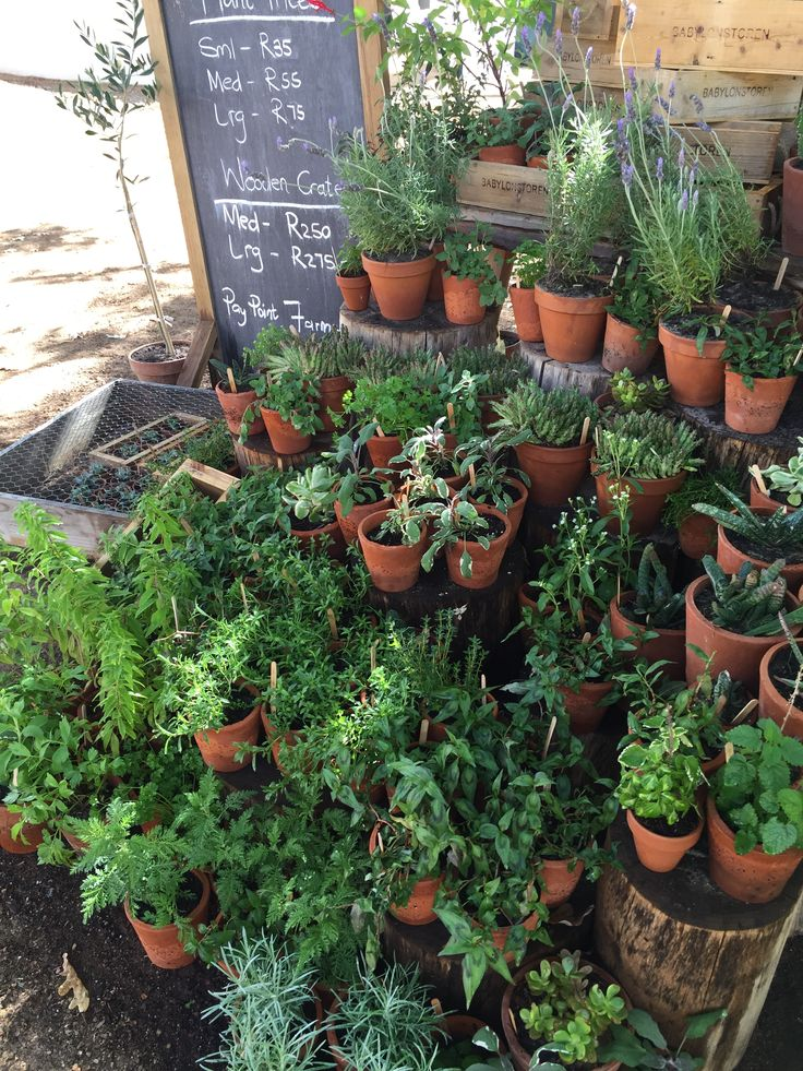 Various plants and herbs grown from their garden available for you to purchase and start your own veggie garden. #GourmetAfrica #Babylonstoren #foodie