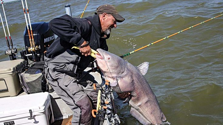 Shallow-Water Tactics for Catching Super-Sized Blue Catfish