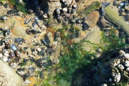Rock pools at Cliff End, Pett Level