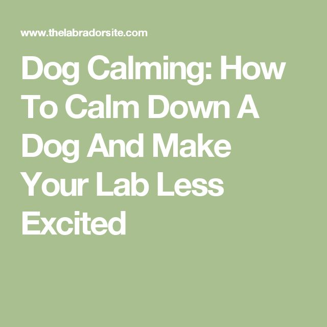 How Can I Calm My Dog Down From Fireworks