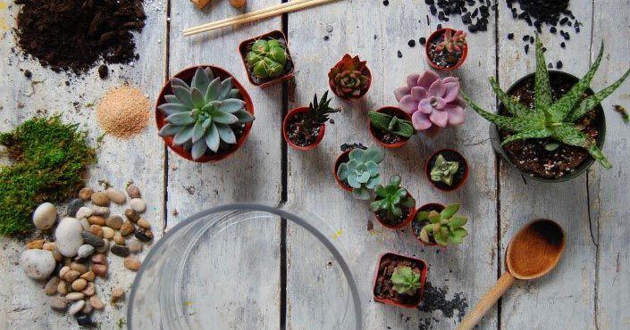 DIY návod a kreatívne nápady - inšpirácie na rastlinné teráriá ako krásny dekoratívny prvok interiéru - domácnosti. Sukulenty, kaktusy, mach, bonsaje, kvety