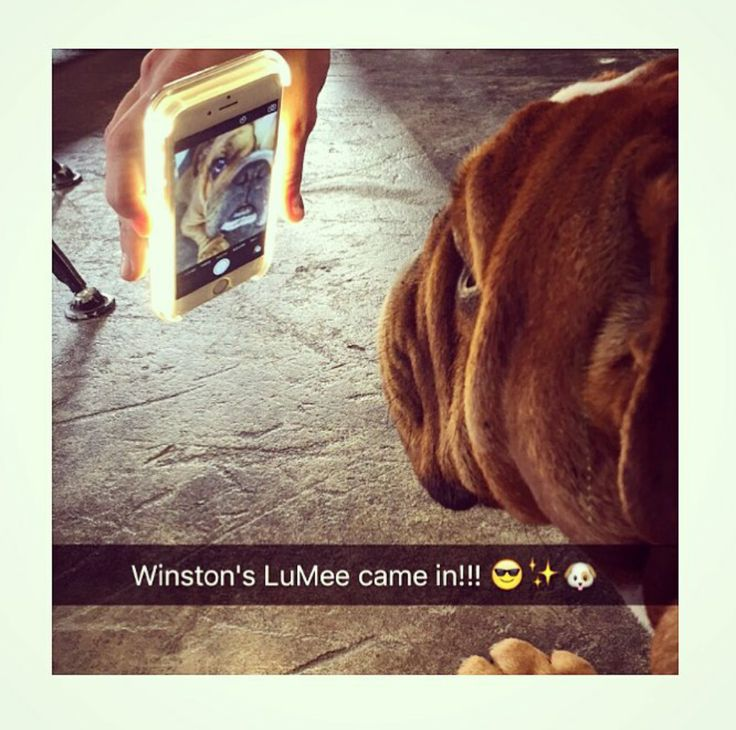 This is our new friend Winston with his first #LuMeeCase! Thanks @erinrich__ & @winstonthebulldog_ from Instagram! #LuMeePetSelfie