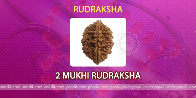 2 mukhi Rudraksh by Rahul Kaushal Astrologer --------------------------------------------------------- It has 2 lines on it and it relieves from the bad deeds done to cow and it stabilizes mind also. After wearing 2 mukhi Rudraksh one can feel the change and is good for family too. It resolves issues of husband and wife and it enhances trust and good thoughts in mind as well. http://www.pandit.com/2-mukhi-rudraksh/