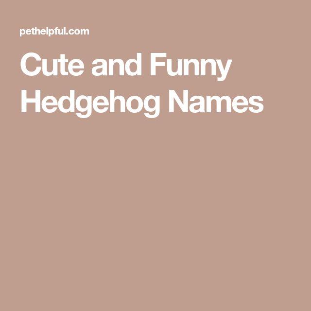 Cute and Funny Hedgehog Names