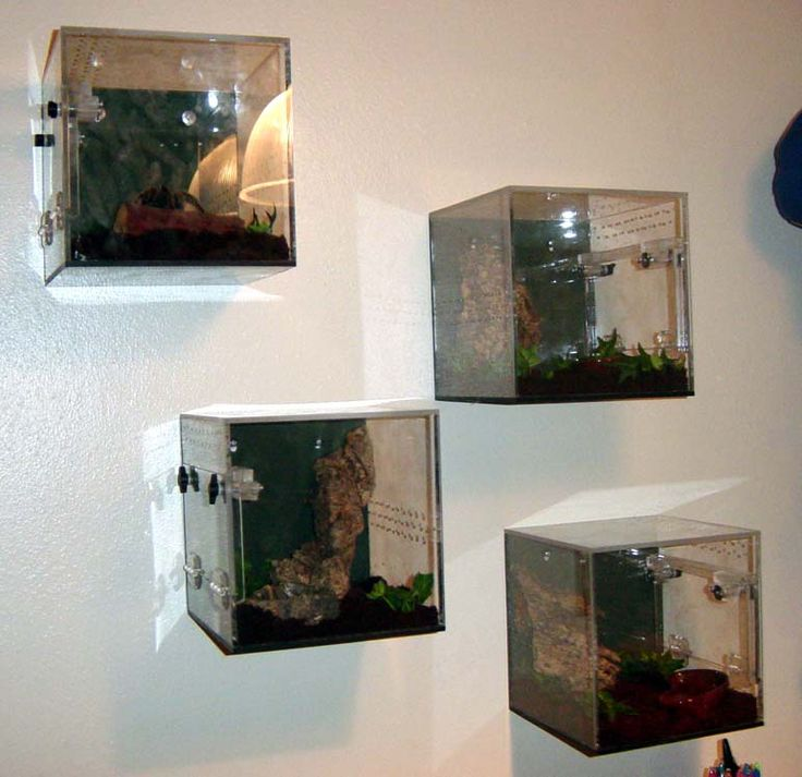 Tarantula Enclosures But could be used for lizards! Neat idea to hang on a wall -K