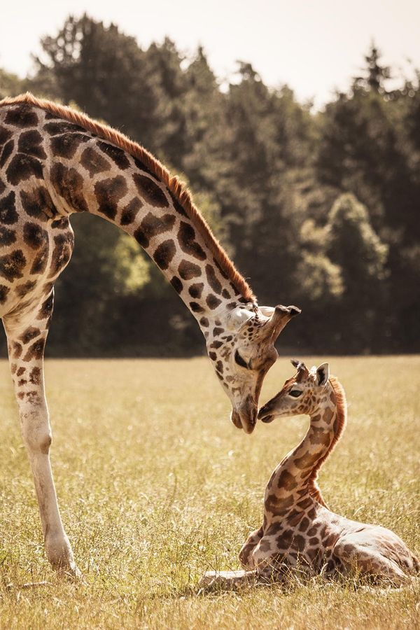 What a touching moment between mother and child.