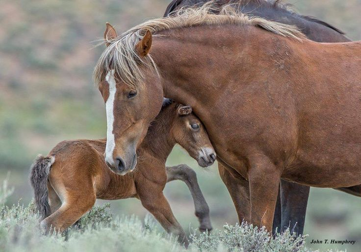 Wild Horses: Wyoming's Wild Horse Herds Will Never Be the Same