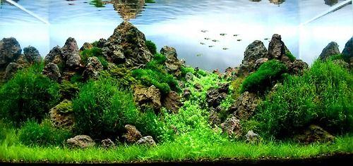 ... Tank, Aquariums, Tropical Fish, Aquascape, Freshwater Aquarium